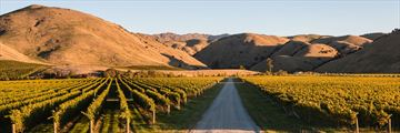 Vineyards in Wither Hills, Marlborough Sounds
