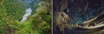 Whanganui River & Glow Worm Caves