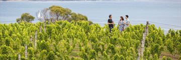 Wine tour on Waiheke Island