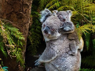 Top 10 destinations for wildlife spotting in Australia