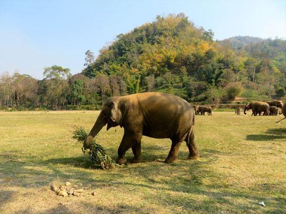 Elephant Nature Park Chiang Mai Accommodation