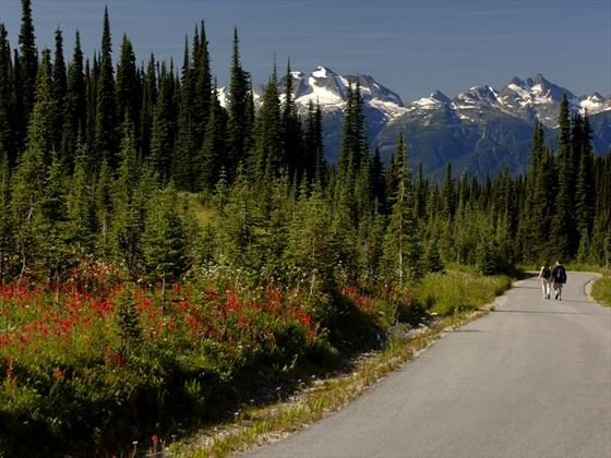 People walking along a road in Mount Revelstoke National Park