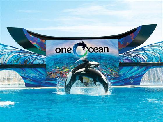 One Ocean show at Seaworld, Orlando