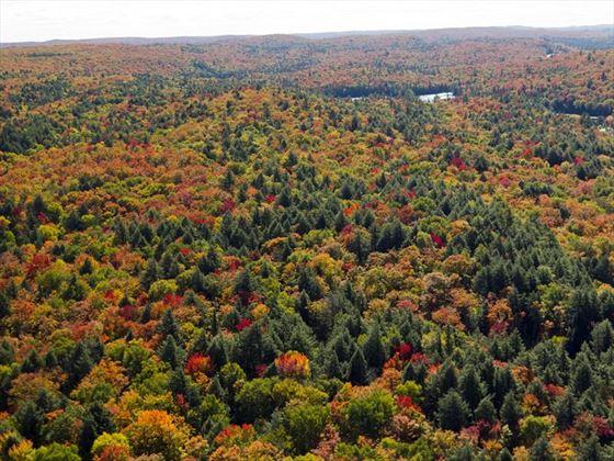 Aerial view of Algonquin Provincial Park