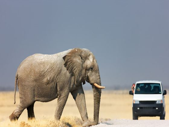 Take an African safari for amazing wildlife sightings