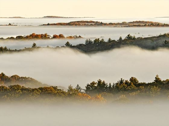 Algonquin Provincial Park in fog, Ontario