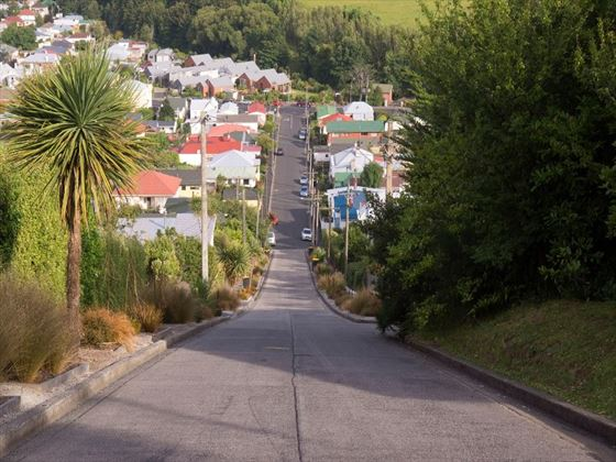 Baldwin Street - Steepest Street in the World