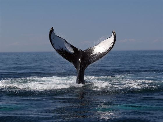 Go whale watching on Cape Cod