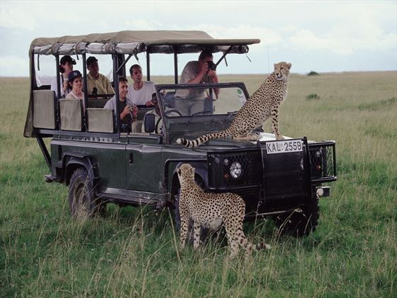 Watch cheetahs roaming by the 4x4