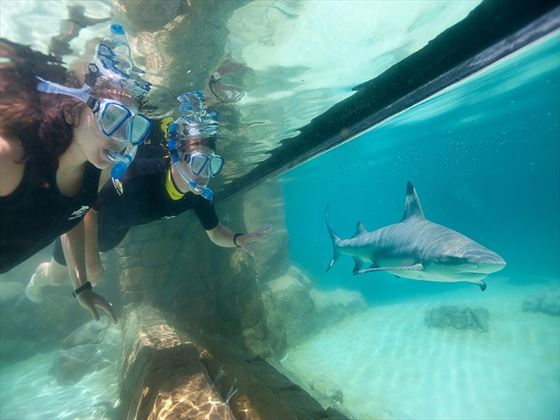 Grand Shark Reef at Discovery Cove® Orlando