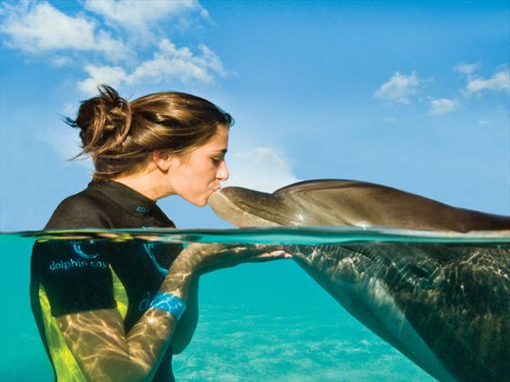 Dolphin experience at Atlantis The Reefs