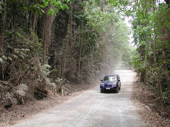 Driving in the rainforest