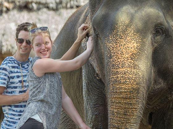 Elephant Hills elephant encounters