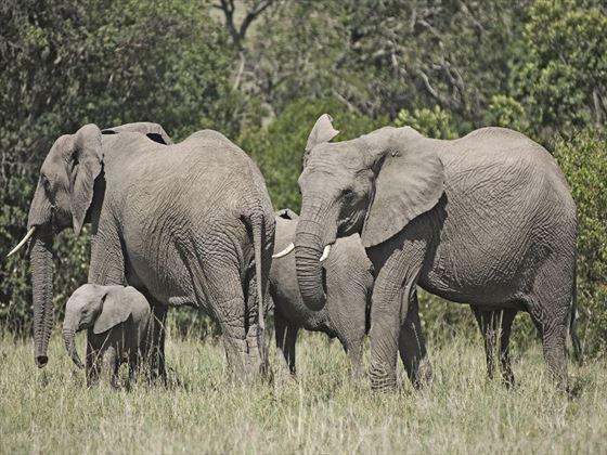 Elephants at Porini Lion Camp