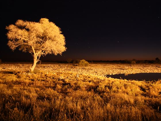 Etosha National Park at night