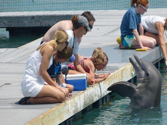 Feeding Dolphins at Hawks Cay