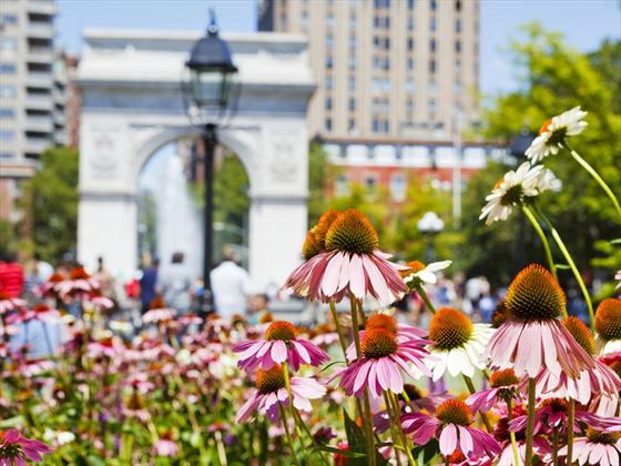 Flowers in Washington Square Park, NYC