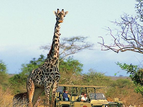 Game drives at Porini Amboseli