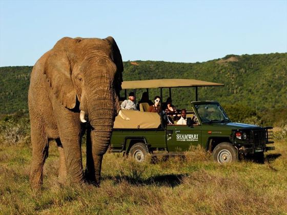 Elephant sightings at Shamwari Private Game Reserve