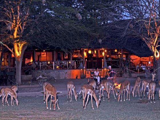 Gazelles at Satao Camp