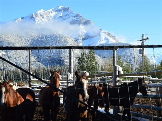Horses at Sundance Lodge
