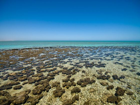 Living rocks at Shark Bay