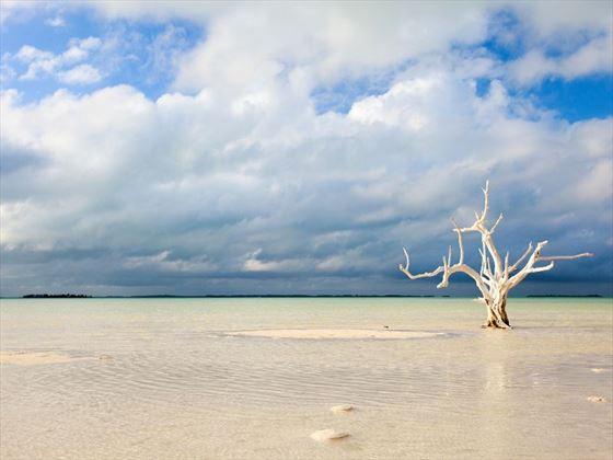 Tree at the beach