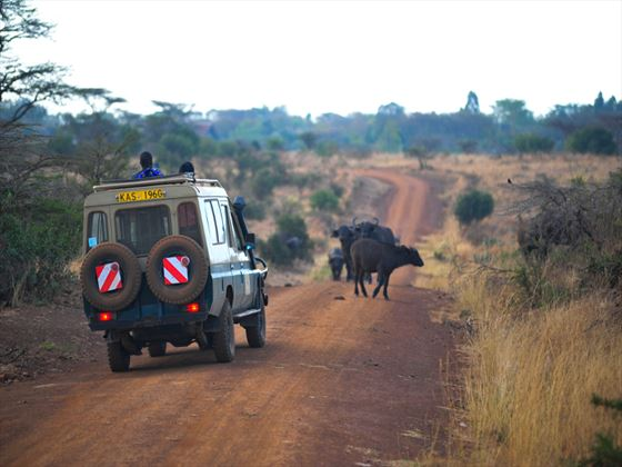 Nairobi Tented Camp game drives