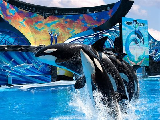 One Ocean at SeaWorld® Orlando