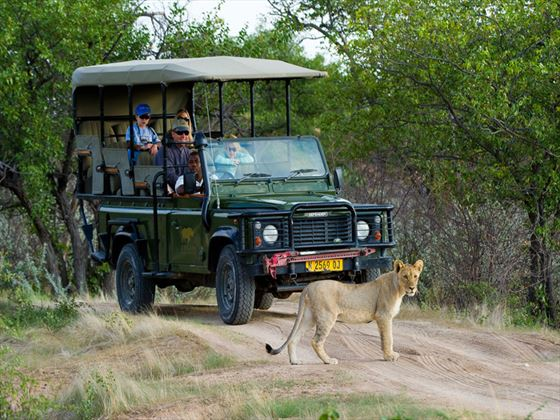 Ongava Tented Camp game drive