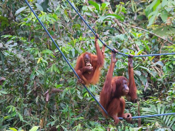 Orangutan Rehabilitation Centre