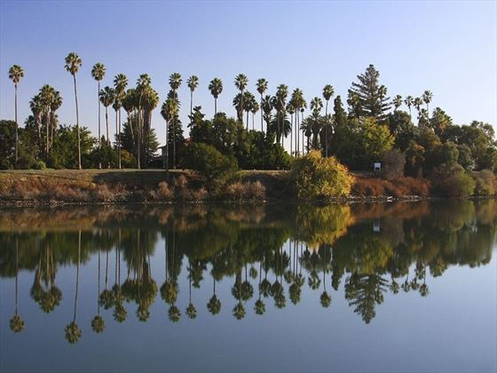 Palm trees on the banks of the Sacramento River