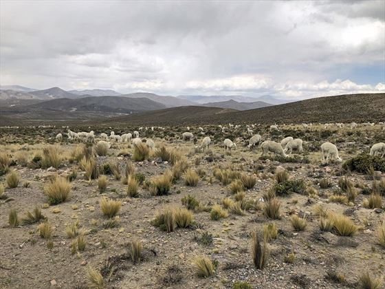 Peruvian landscapes and wildlife