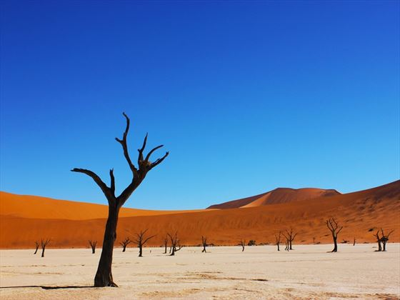 The Petrified Forest, Namibia