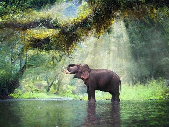 Recue elephant in Kanchanaburi