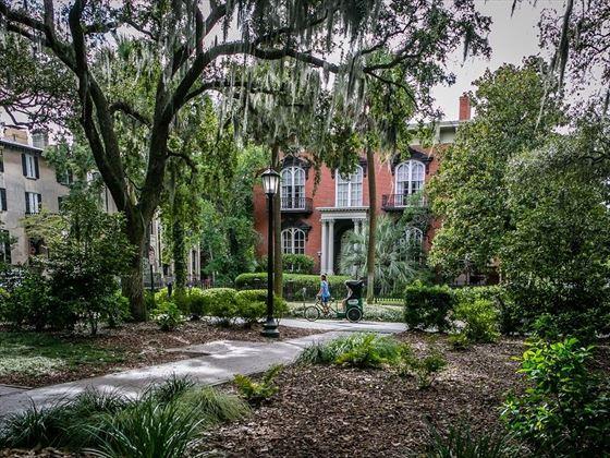 Savannah neighbourhood