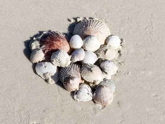 Love on the beach at Sheraton Sand Key Resor