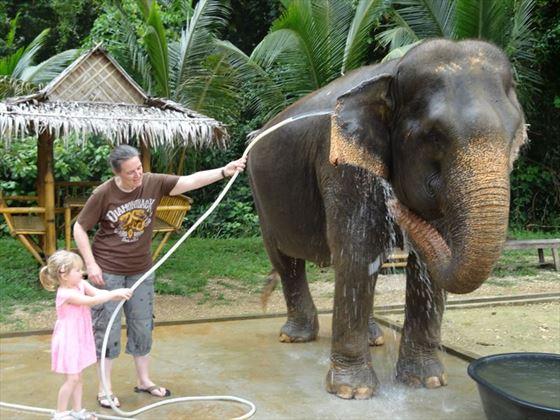 Washing the elephants at Elephant Hills