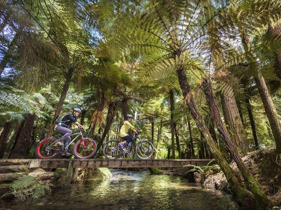 Cycling in Whakarewarewa Forest, Rotorua
