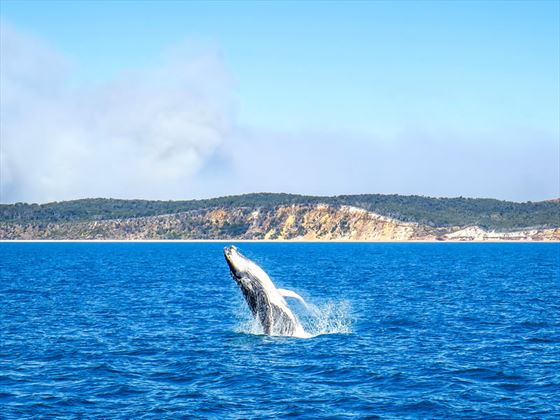 Whales cruise in Hervey Bay, Great Barrier Reef
