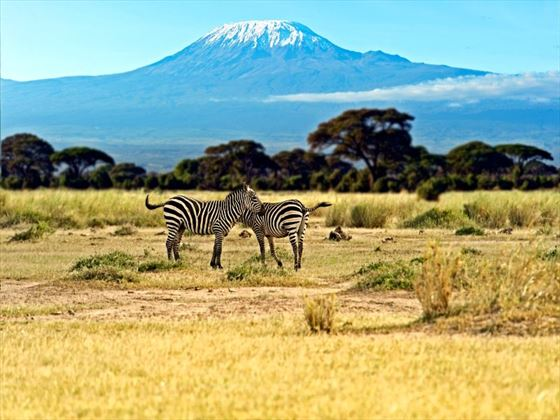 Zebra at Amboseli National Park