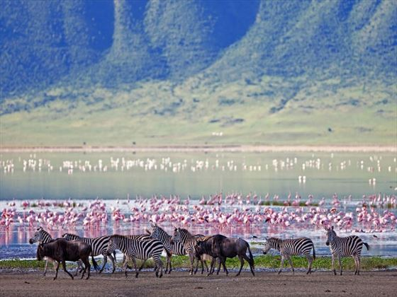 Wildlife in the Ngorongoro Crater