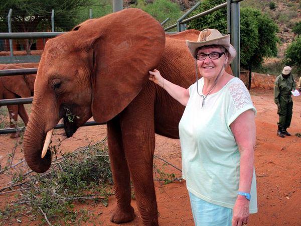 elephant orf16