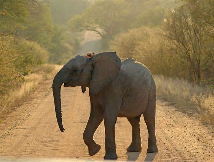 Mike Collins elephant in South Africa