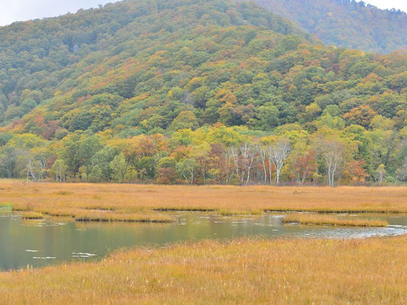 autumn in oze national park japan