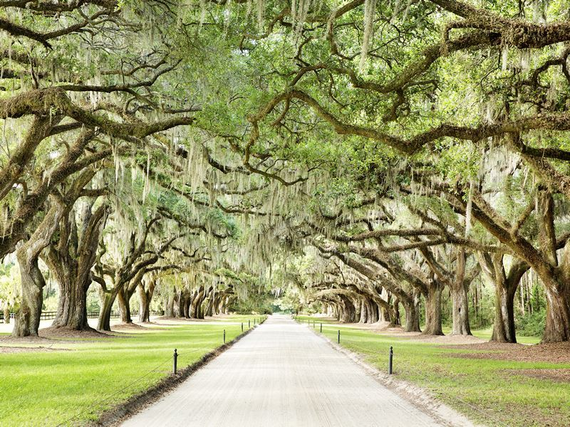 boone hall charleston