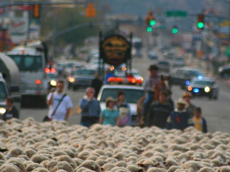 cedar city livestock heritage festival sheep parade utah