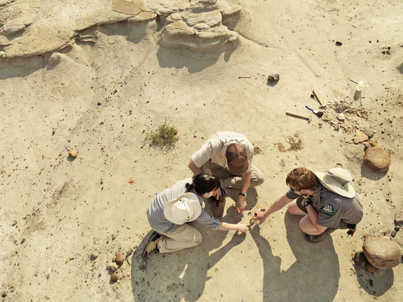 digging for fossils at dinosaur provincial park