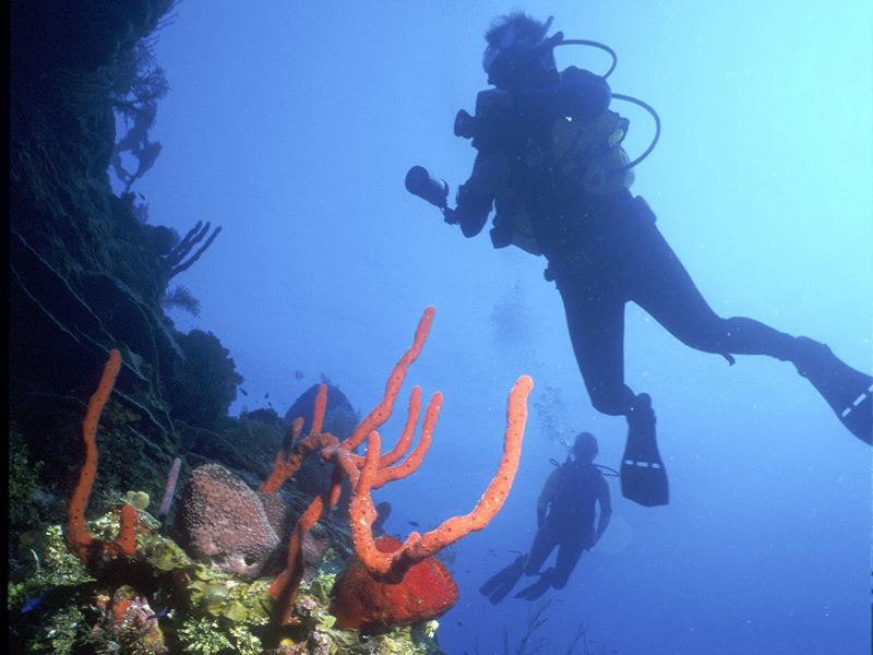 diving in st kitts