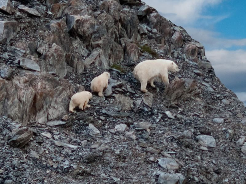 labrador torngats mountains polar bears barrett mackay